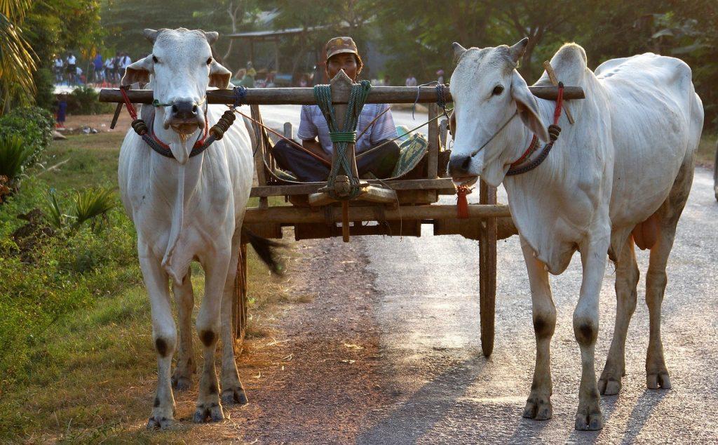 Paysan du Cambodge