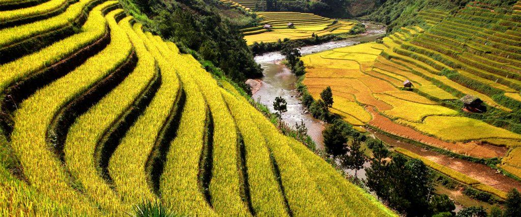 Les rizières de Birmanie